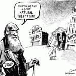 Misunderstanding Darwin